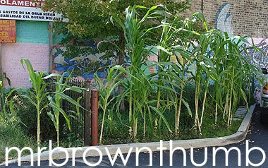 parking lot farm, urban gardening urban farming