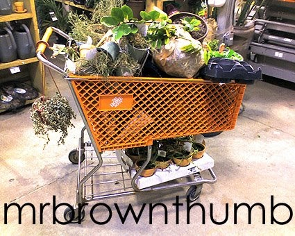 unusual garden blocks home depot. Home Depot Houseplant Hearse MrBrownThumb unusual garden watering system Unusual  Garden Watering System Design Plan The Best 100 Image