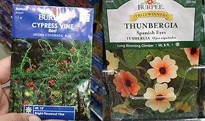 Burpee Seeds, Cypress Vine seed packs, Cardinal Climber Seed Pack