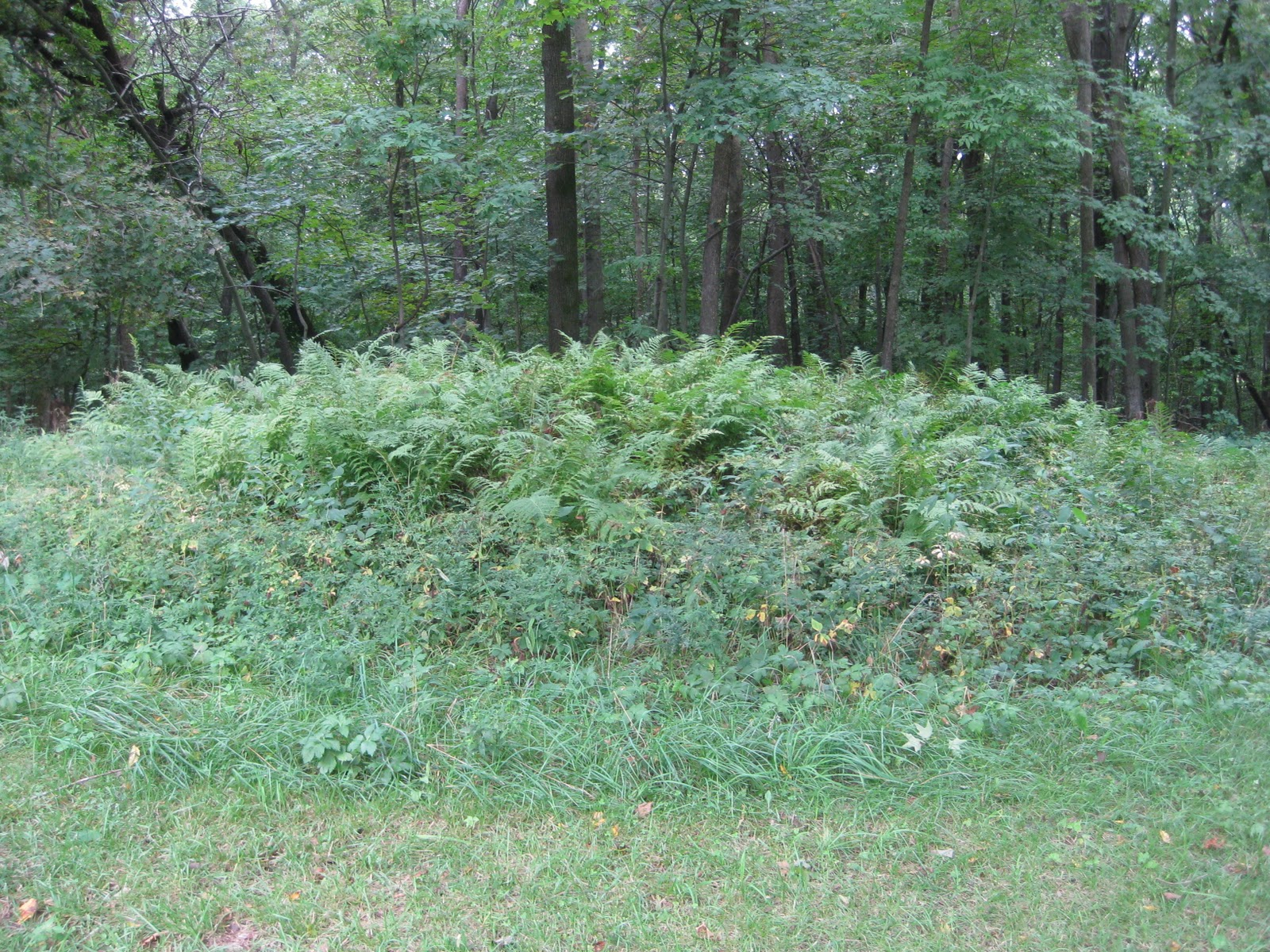 """Picture of indian mounds found in sc"""", """"moundsville daily echo"""