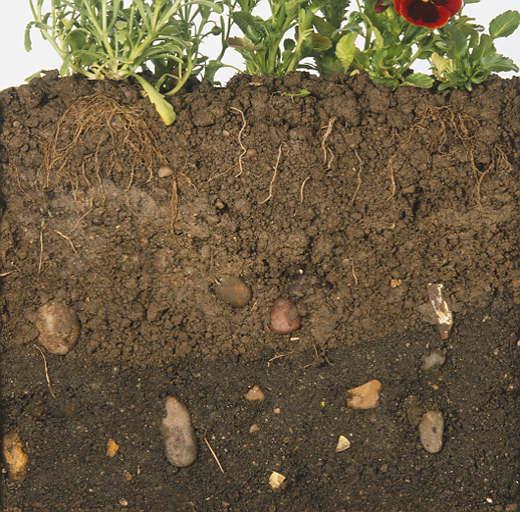 [soil+cross+section]