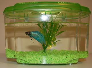 buy baby a fish at world of pets