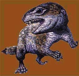 Trithelodontidae1.jpg