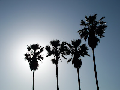 Palms near the Stockton Channel