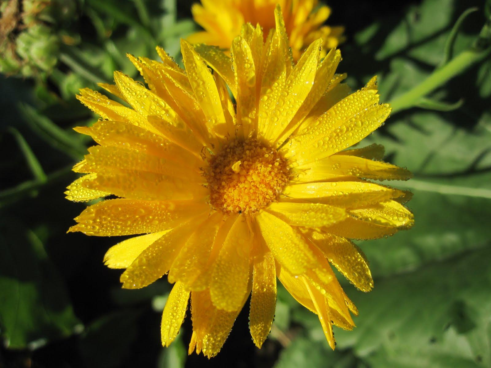 Row Flower Garden : Garden color skin and hair care row