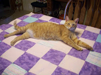 Jasper stretched out on quilt