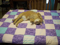 Jasper posing on quilt