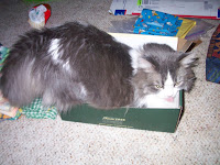Annie attempting to squeeze into the shoe box.
