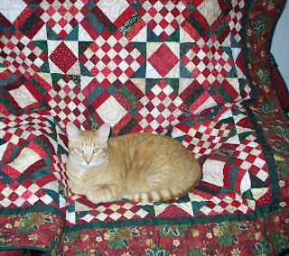 Jasper hunkered down on my quilt in my chair