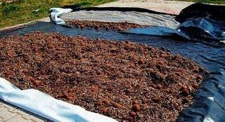 Κομπόστ λίπασμα απο τα φύκια με φυσικό τρόπο...