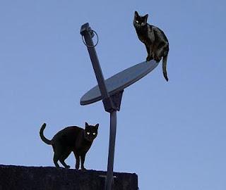Justiça determina que fazer gato no sinal das operadoras é legal