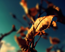 Autumn - Golden Leaf