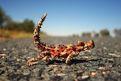 Amazing Mutant Animal Seen On www.coolpicturegallery.us