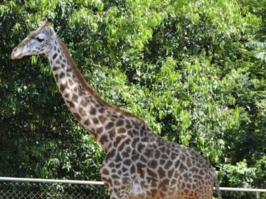 Passeio Zoo Americana