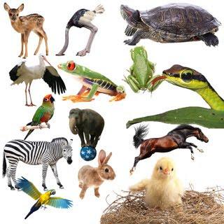 animales PSD photoshop