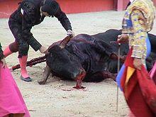 killing_bull