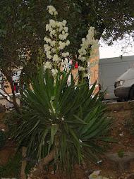 Flors al carrer Europa