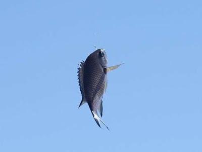 Del amor entre una nube y un pez volador