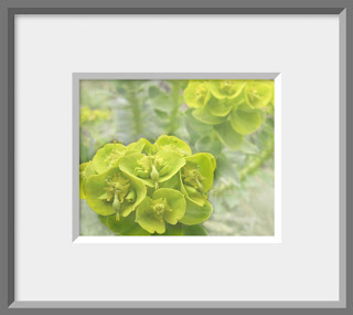 Framed close up of yellow green flower