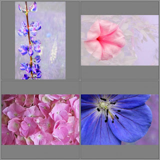 Set of four flower blank all occasion cards.