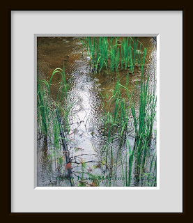A framed photo of raindrops falling on a beaver pond causing splashes of circles.