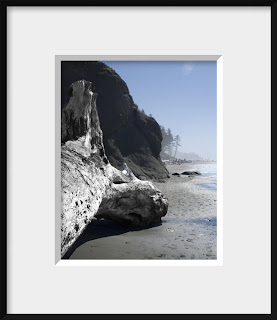 framed photo of an aged and surf beaten giant log was a wall between the ocean and the forest