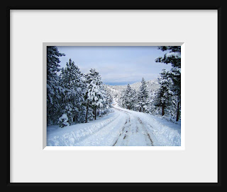 A framed photo of a winter wonderland of snowy pines greets me when I walk down my mountain top drive in the Colorado Rocky Mountains.