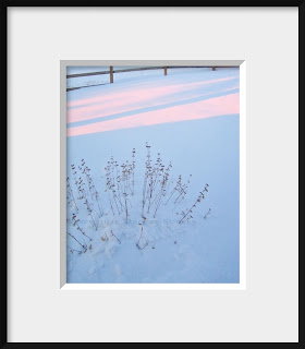 A framed photo of last year's dried flowers look lovely under a blue blanket of snow in the soft rose light of sunrise.