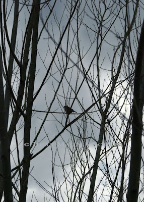A photo of a small bird silhouette resting on tree branches against a gray storm clouded sky.