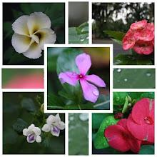 .:Bunga:.