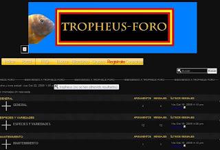 tropheus-foro