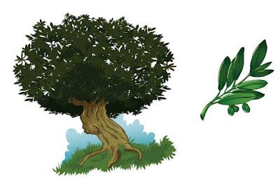 ilustracion olivo
