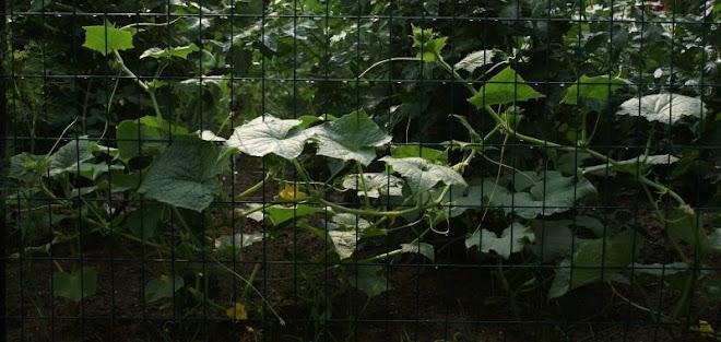 the neighbor's magic garden