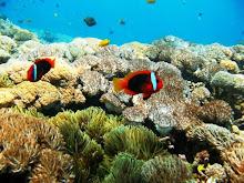 Nusa Penida's Coral Reef