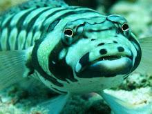 Nusa Penida Coral Fish