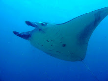 Manta Ray, Nusa Penida