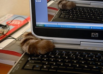 Recursive cat can has your desktop!