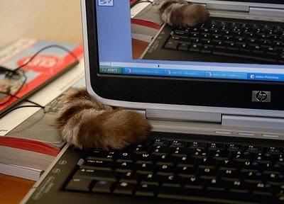 Recursive cat can has your desktop!