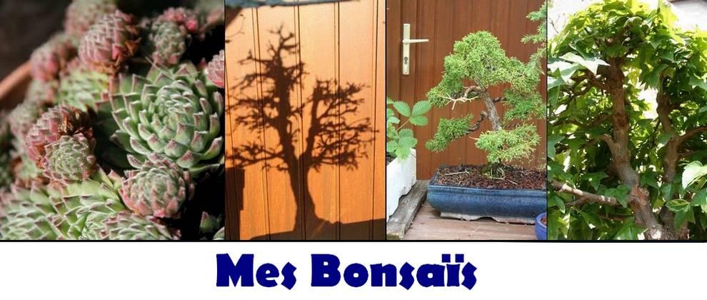 Mes bonsaïs