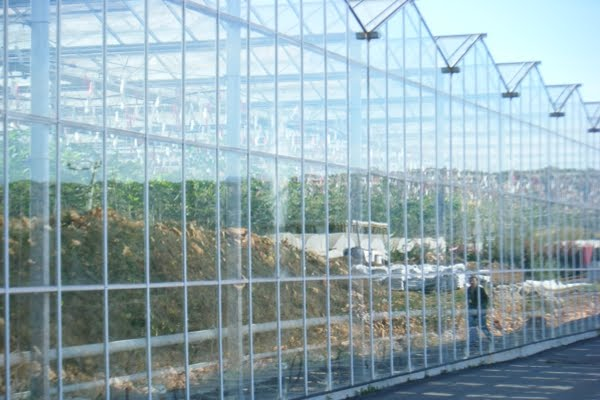 Tecnologiagricola abril 2010 - Invernaderos de cristal ...
