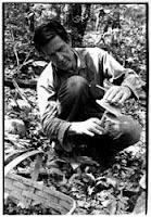 JC collecting mushrooms