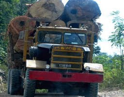 Truk Illegal Logging