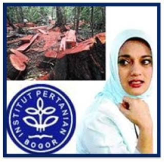 Pemberantasan Illegal Logging