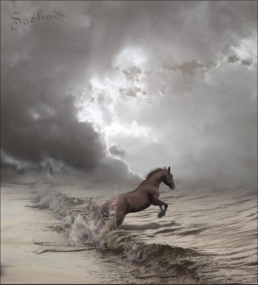 caballo de mar. caballo de mar. CABALLOS