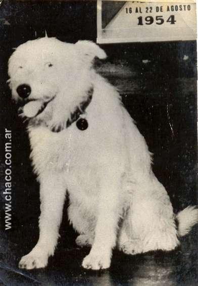 Fernando, el perro que venció al olvido(Chaco,arg)
