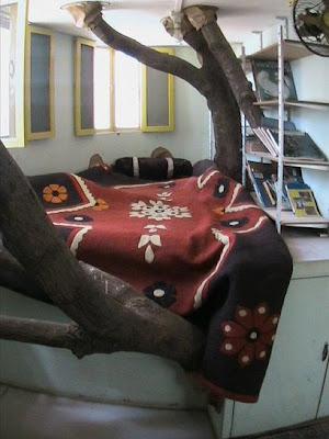 house on a mango tree photos