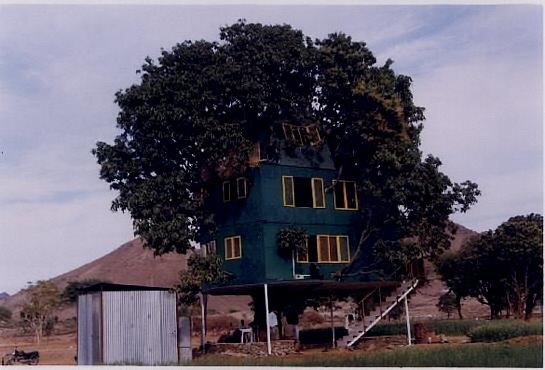 house on a mango tree