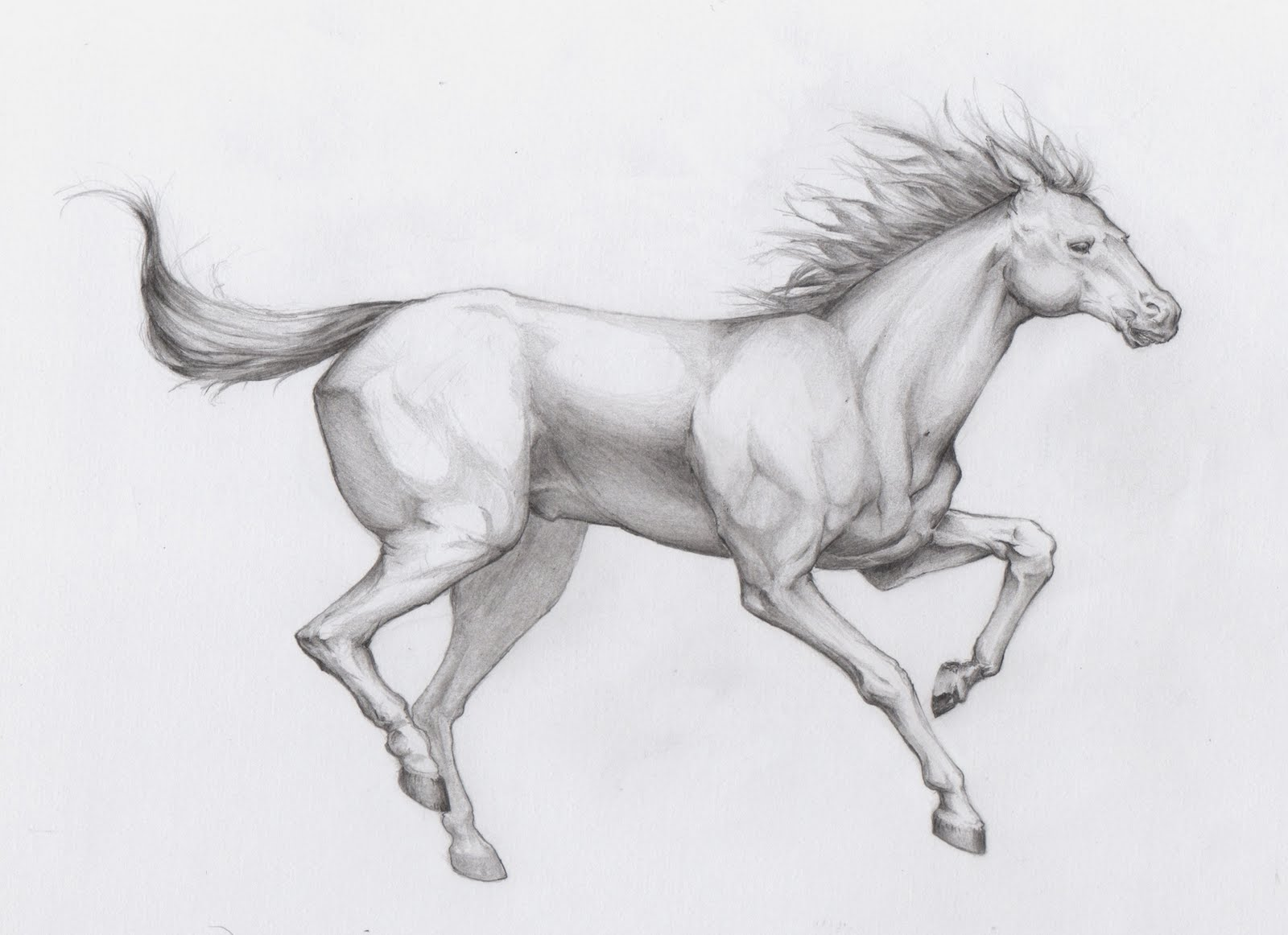 How To Draw Amazing Horse