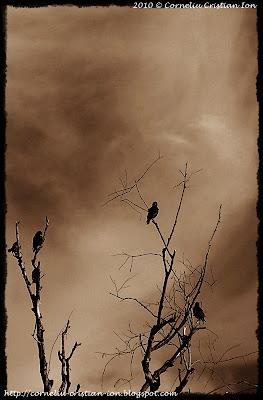 © Corneliu Cristian Ion