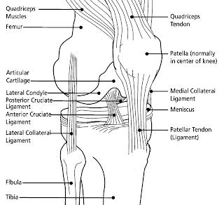 Prepatellar Bursitis also Laminitis in addition 1992 further Hamstring as well Art21. on diagram of knee ligaments injury